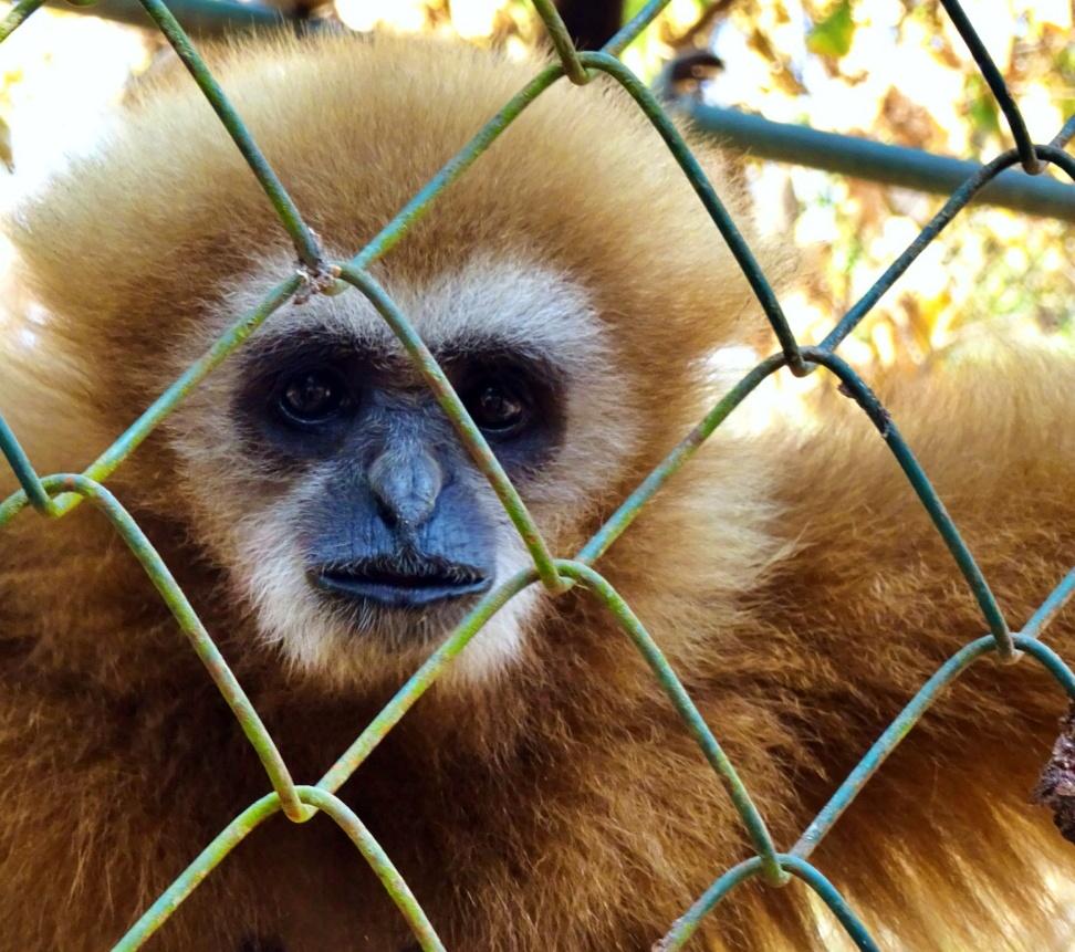 Monkey WWT
