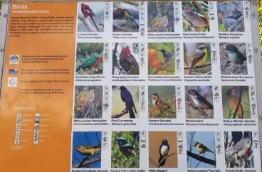 A variety of bird life